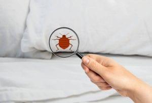 détecter punaises de lit